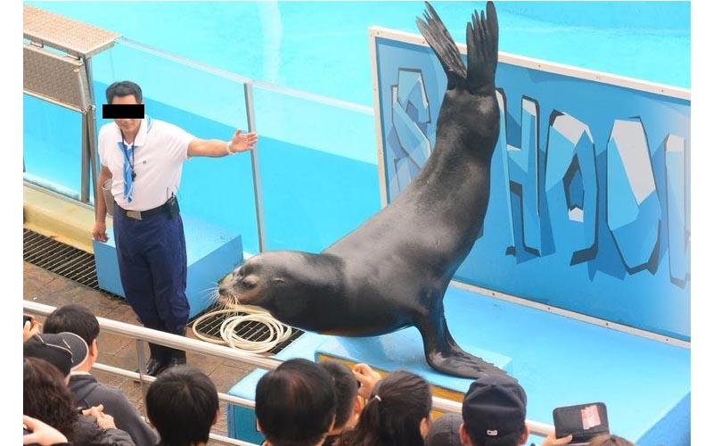 離職員工爆料!海洋公園殘忍內幕:無法受訓就殺掉、園裡動物存活率竟不到6成!