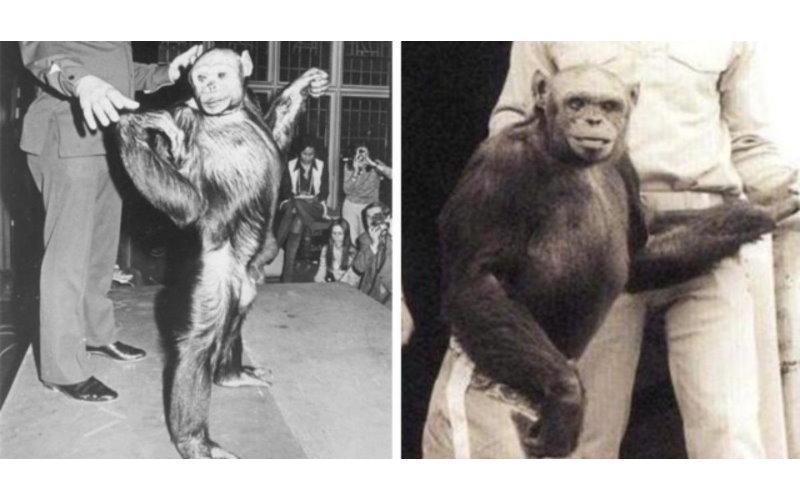 「人猩混種」百年前就成功!科學家看到結果太過害怕 決定直接殺死他⋯