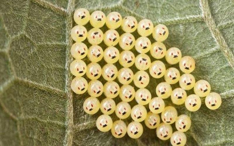 男子野外發現可愛「微笑小圓球」,決定帶回家孵化,沒想到...尷尬了!