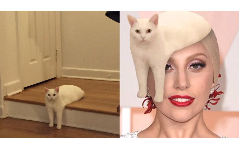 這一張詭異的貓咪姿勢照片 讓美國鄉民再度召開「PS 大賽」!  -
